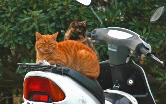 メットインと猫